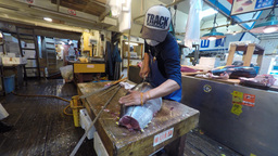 Tokyo, Japan - Fresh Tuna main cut by professional Japanese tuna handlers at Tsu Footage