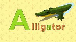 Alligator. English ZOO Alphabet - letter A Footage