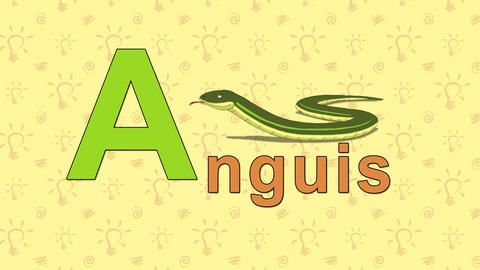 Anguis. English ZOO Alphabet - letter A Live Action