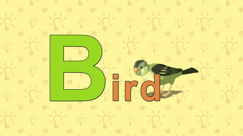 Bird. English ZOO Alphabet - letter B Live Action