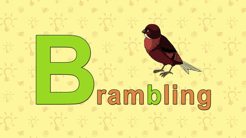 Brambling. English ZOO Alphabet - letter B Live Action