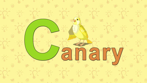 Canary. English ZOO Alphabet - letter C Footage