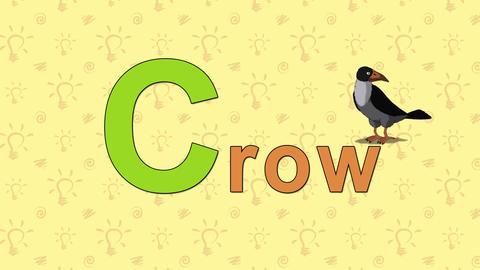 Crow. English ZOO Alphabet - letter C Footage