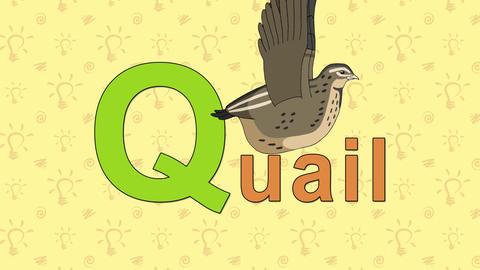Quail. English ZOO Alphabet - letter Q Footage