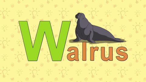 Walrus. English ZOO Alphabet - letter W Footage