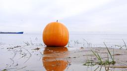 Large ripe pumpkin lie on lake sandbank, closeup shot, against water surface Footage