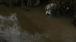 Dirty brown creek, dark polluted waste waters, ugly garbage bag in stuck at bank Live Action