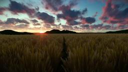 Wheat field against beautiful timelapse sunrise Animation