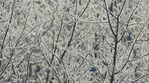 Branches of tree covered with frost on frosty day Footage