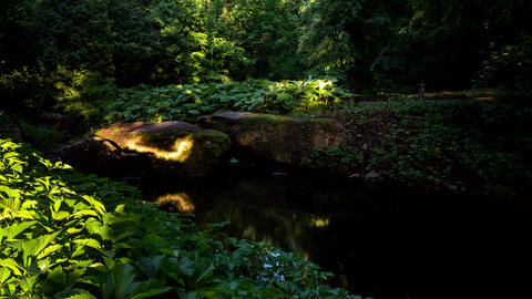Sunset shadows on rocks and river timelapse in Park, Ukraine. 4k footage Footage