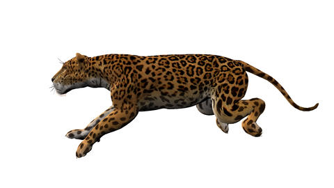 leopard runs,loop, animation, Alpha channel Animation