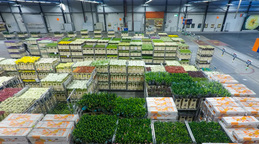 Time lapse Auction floor at Aalsmeer floraholland largest flower auction the the Footage