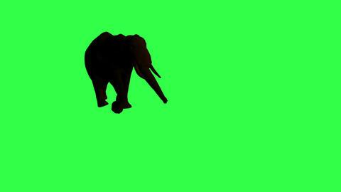 African Elephant moving Animation