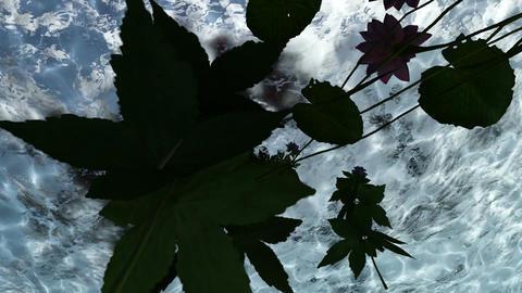 flowers under water in lake water Stock Video Footage