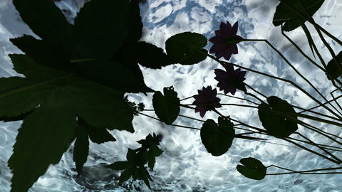 flowers under water in lake water Animation