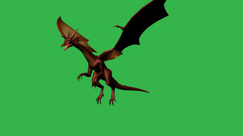 Dragon in fly - separated on green screen Animation