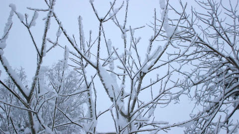Snowy branches of trees Footage