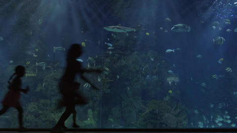 Children silhouettes against huge aquarium Live Action
