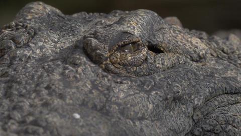 Crocodile eyes and jaws Footage