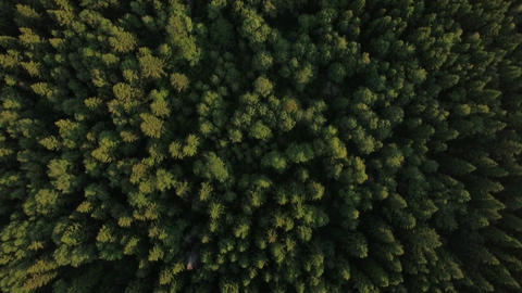 Flying over green forest and village near the road, Russia Live Action