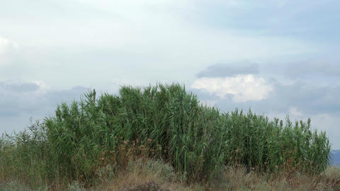 View of agricultural field with tall grass in windy weather at summer Footage
