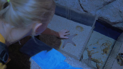 Woman touching starfish in oceanarium Live Action