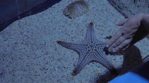 Female hand touching starfish in aquarium Live Action