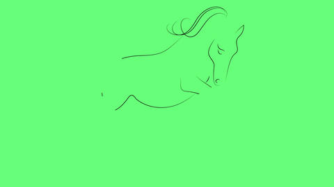 drawing elegant horse in black- white a minimal style Animation