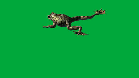 frog eat ,walk and jump - green screen Animation