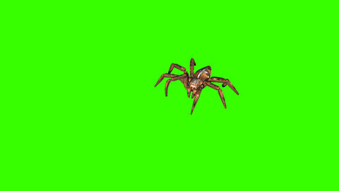 spider on green screen creepy crawling Animation