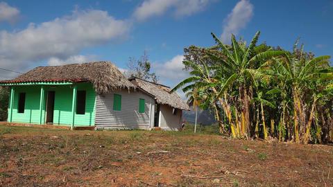 Famous Cuba farmland tobacco area Live Action