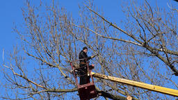 Pruning trees using a lift-arm Footage