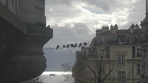 Ominous birds sitting on wire, mysterious atmosphere in ancient haunted city Footage