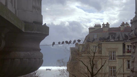 Flock of pigeons sitting on wires in old European city near lake and mountains Footage