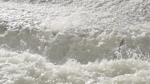 Large Salmon Jumping Waterfall In Slow Motion Footage