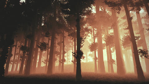 Mysterious Fairy Tale Deep Forest 4 Animation