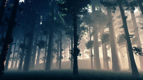 Mysterious Fairy Tale Deep Forest with Fireflies 2 Animation