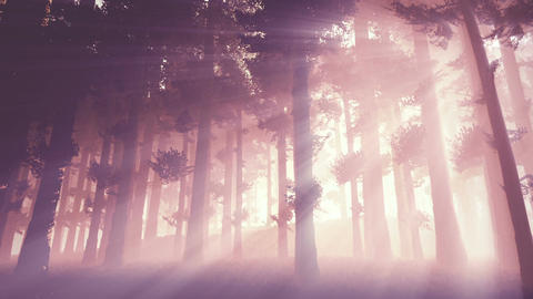 Mysterious Fairy Tale Magic Deep Forest with Lightrays 4 Stock Video Footage