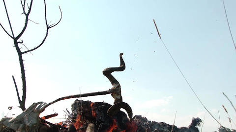 Funeral pyre decorated with ram horns that are falling in flames 2449k Footage