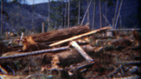 1949: Giant Log Crane Lifting Massive Red Wood Pine Cut Tree Sections stock footage