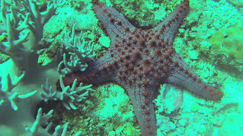 Starfish on the sandy bottom Footage