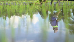 View planting rice in mirroring POV Footage