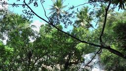 Thailand Ko Samui Island 013 waterfall behind tropical plants Footage