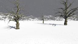 01 winter Animation