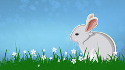 Easter Rabbit (2) CG動画素材