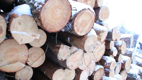 Snowy log stack lumber in winter. Woodpile of pine Footage