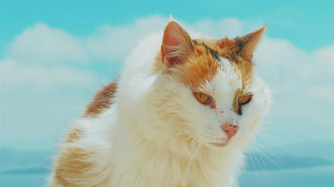 Cat Set Against Blue Sky Background Footage