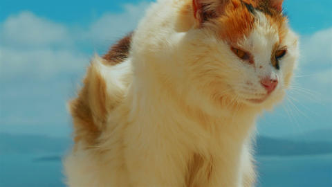 Ultra Close-up of a Cat Set Against Blue Sky Background Footage
