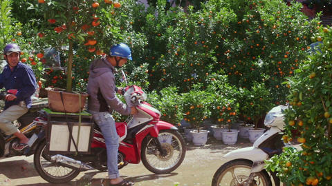 Guy Starts Drive on Motorbike with Mandarin Tree Pot for TET Footage