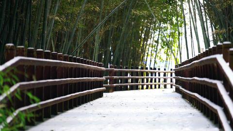 Winter-bamboo4 Footage